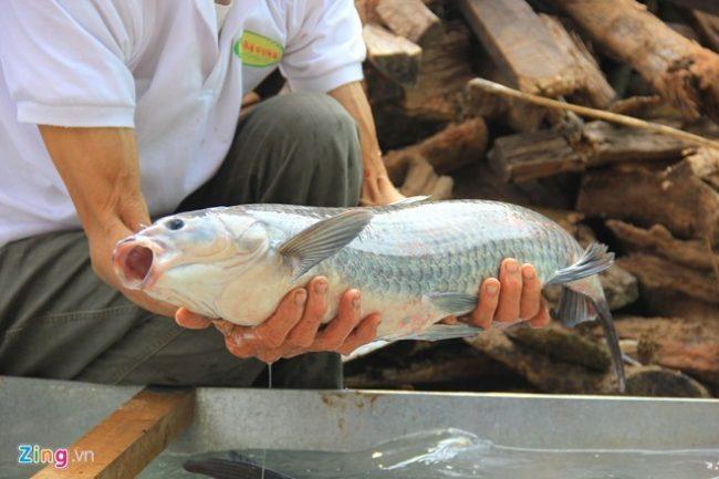 Cá trắm đen nuôi cỏ phải đạt từ 3 đến 5kg